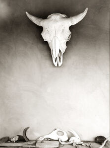 Todd Webb, 'On the Portal at Georgia O'Keeffe's Ghost Ranch House, New Mexico [Cow Skull]', 1960