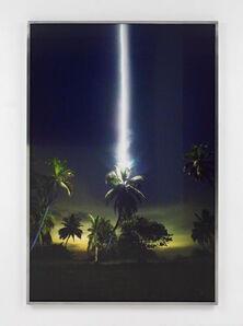 Julius von Bismarck, 'Talking to Thunder (Palm tree)', 2017