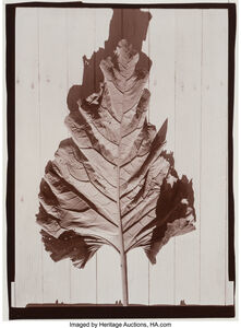 Jeffrey Wolin, 'A Group of Six Photographs of Nature', 1977-80