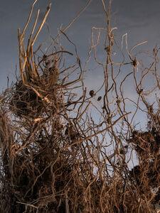 Hrafnkell Sigurdsson, 'Loftað um ræturnar/Airing the roots', 2020