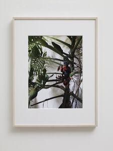 Gabriel Orozco, 'Monkey Family', 2015