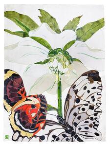 Sarah Graham, 'Helleborus orientalis II', 2019