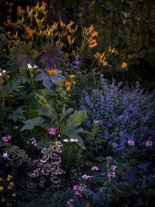 Anna Beeke, 'Midnight in the Garden #215', 2019
