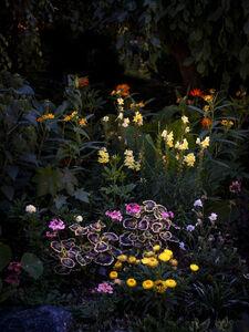 Anna Beeke, 'Midnight in the Garden #213', 2019