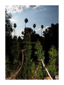 Oli Rodriguez, 'A Familiar Panting: Native Plants', 2019