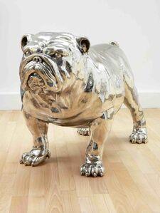 Mauro Corda, 'bulldog femelle', 2012