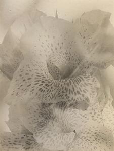 Edmund Teske, 'Lily', 1950s