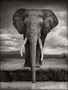 Nick Brandt, 'Elephant Drinking, Amboseli', 2007