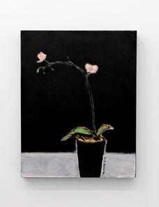 Ng Chung, 'Orchid', 2019