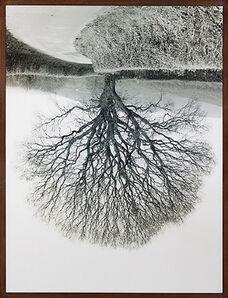 Rodney Graham, 'Welsh Oaks #1', 1998