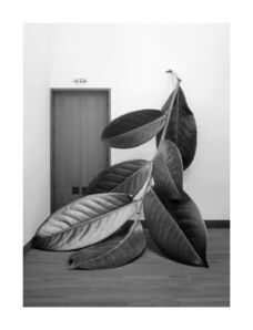 Alex Grein, 'Prunus Laurocerasus', 2018