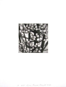 Sylvia Plimack Mangold, 'Maple Tree Detail A', 2009