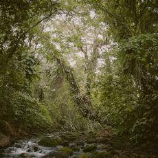 Virgin Forest