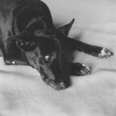 Clarissa Dalrymple's Dog, Kirsten