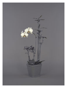 Stephanie Syjuco, 'Neutral Orchids (Phalaenopsis + Dracaena sanderana)', 2016