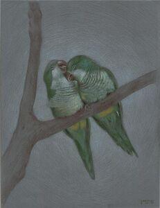 Daniel Maidman, 'Monk Parakeets', 2020