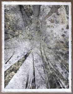 Bill Claps, 'Bamboo Canopy Miniamioguni', 2018