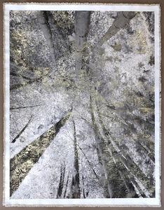 Bill Claps, 'Bamboo Canopy Miniamiaguni', 2018