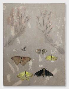 Mari Eastman, 'Moths'