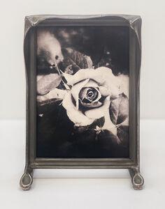Wendi Schneider, 'The Last Rose', 2019