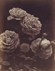 Charles Aubry, 'Four Roses and a Dandelion', ca. 1864