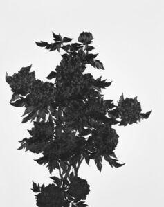 Kim Eunju, 'Then I quietly draw a flower', 2018
