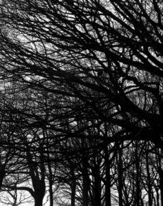 Hélène Binet, 'Winter Hampstead Heath, London', 2012
