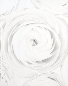 Ron van Dongen, 'Ranunculus 'White Turban' (WOW 051)', 2001