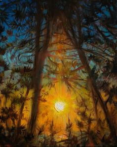 TM Davy, 'Sun in Pines', 2017