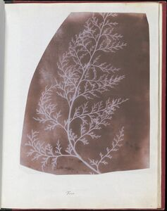 William Henry Fox Talbot, 'Wrack', 1839