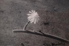 Untitled (Cactus)