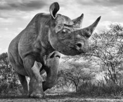 David Yarrow, 'The Departed', 2016