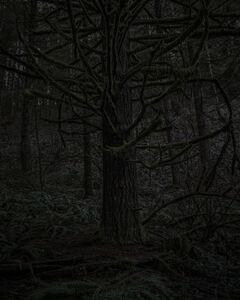 Chris Bennett, 'From the series Darkwood, #23', 2014