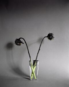 Hanna Liden, 'Flower painting (Sunflowers)', 2012