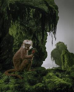 Didier Massard, 'Monkey', 2011