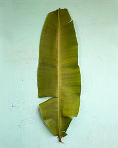 Lana Mesić, 'Banana Leaf Scale', 2014