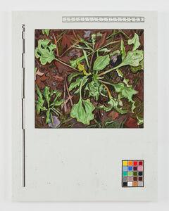 Josephine Halvorson, 'Ground Register (First Frost)', 2018
