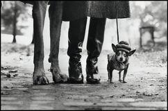 Felix, Gladys & Rover