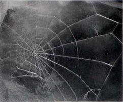 Vija Celmins, 'Spider-Web', 2009