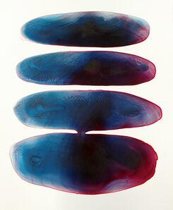 Rhia Hurt, 'Deep Water Corals 1', 2018