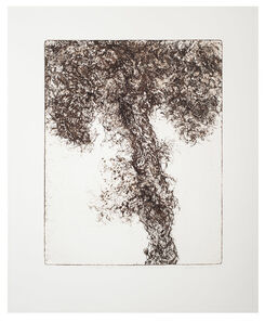 Beth Secor, 'Pecan Tree, Summer of the Drought 2011', 2013