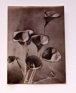 Man Ray, 'Calla lillies', 1930