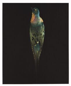 Susan Middleton, 'Requiem', 2008