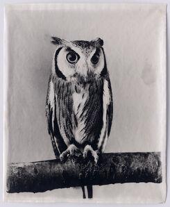 Jean Pagliuso, 'Owl IV', 2009
