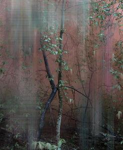 Sandra Kantanen, 'Forest 5'