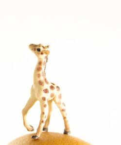 Matthew Carden, 'Grapefruit the Giraffe'