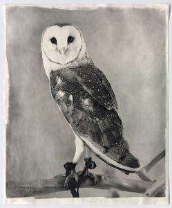Jean Pagliuso, 'Owl XV', 2011