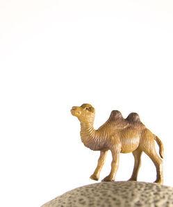 Matthew Carden, 'Cantaloupe the Camel'