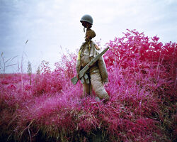 Richard Mosse, 'Better Than The Real Thing II', 2012