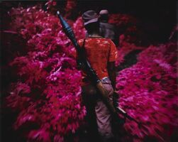Richard Mosse, ''Ruby Tuesday (Infra Series)'', 2011